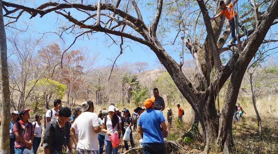 Hojas y Flores que ya no ven los mono congos de Rivas