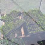 Importancia del semillero en el cultivo de chiltoma (Capsicum annun)
