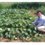 TALLOS Y HOJAS DE CAMOTE (Ipomoea batatas), UNA ALTERNTIVA EN LA   ALIMENTACIÓN ANIMAL, UNIAV- RIVAS, MAYO 2017